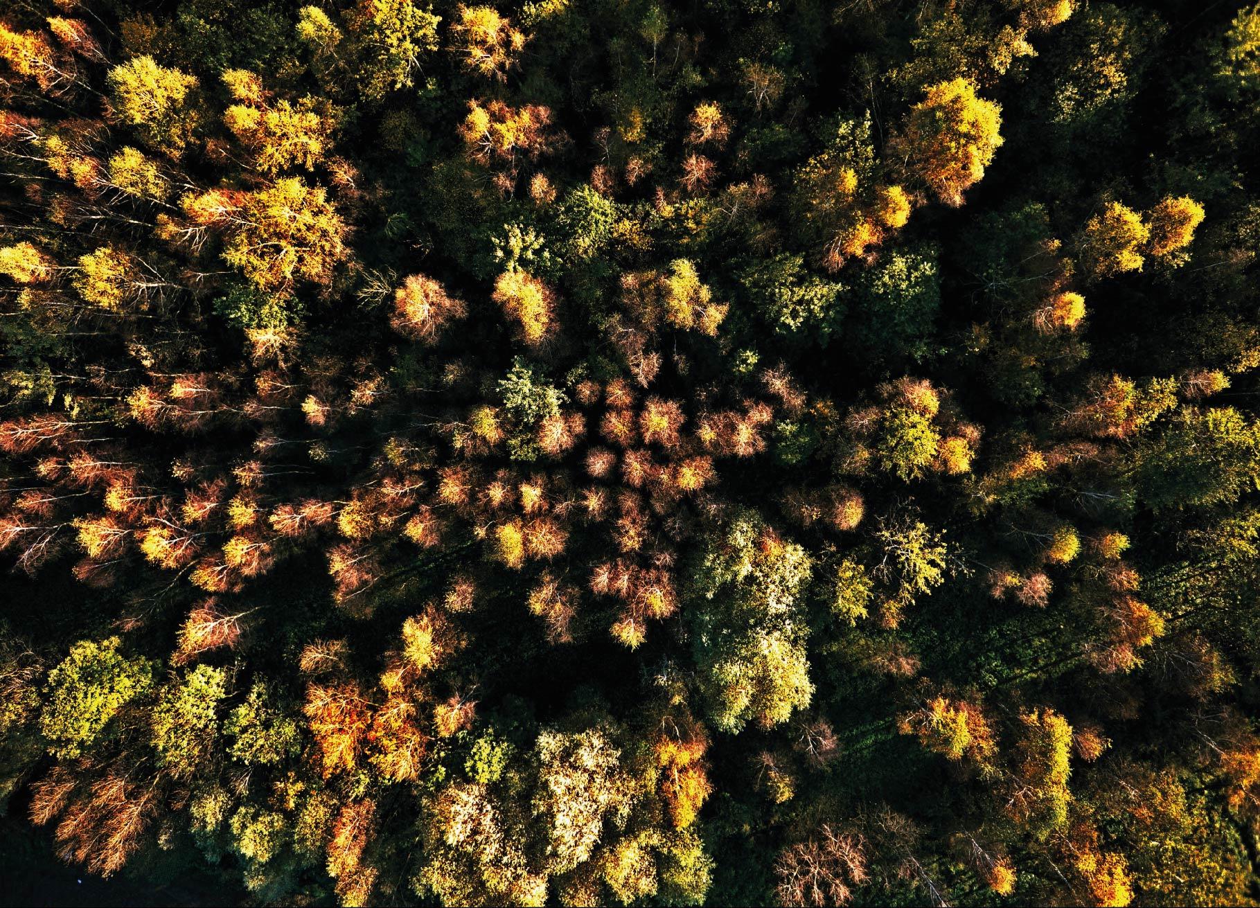 Купить Лес на закате, Краков на Otpravka - цены и фото - доставка из Польши и стран Европы в Украину.