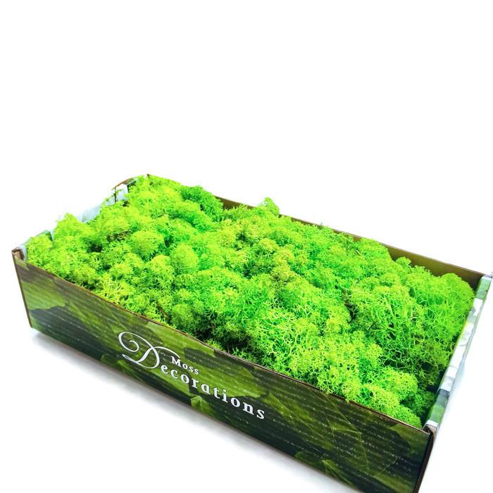 Moss chrobotek Moss dekoratívne Reniferowy pokrývku hlavy 500g
