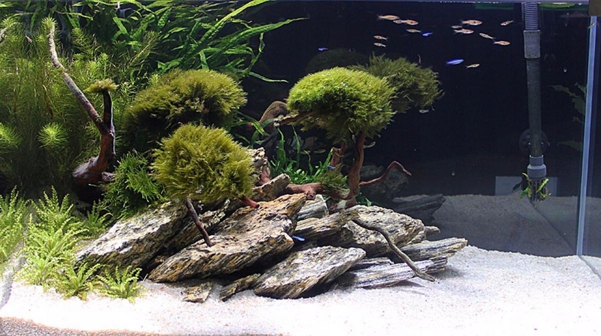 Дизайн аквариума с камнями фото