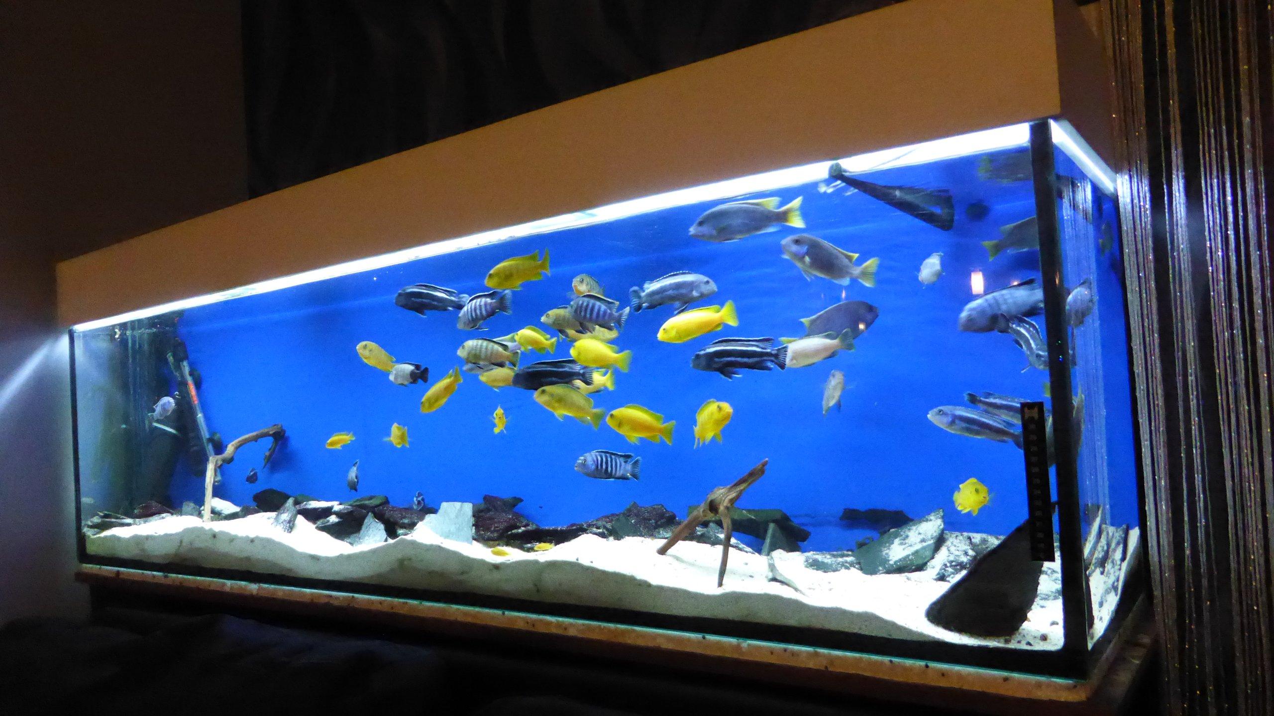 Akwarium 180x40x50 360l Malawi Pełen Zestaw 7145420172 Oficjalne
