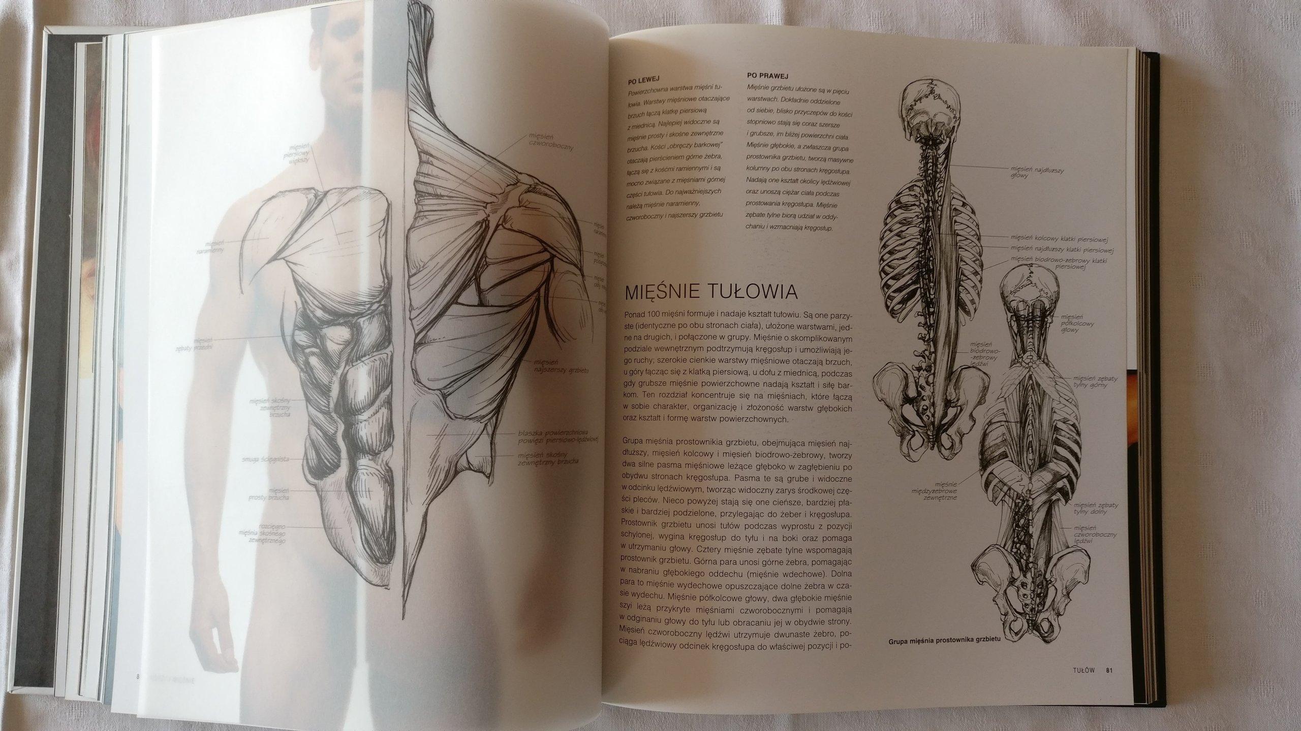 Anatomia dla Artystów Sarah Simblet - 7230138638 - oficjalne ...