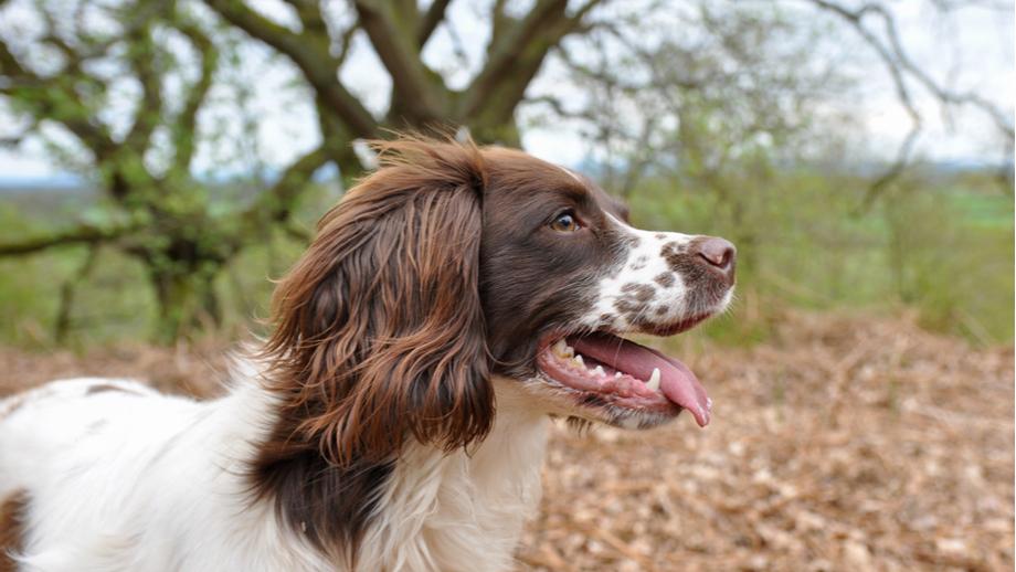 Żywienie psa z chorą wątrobą