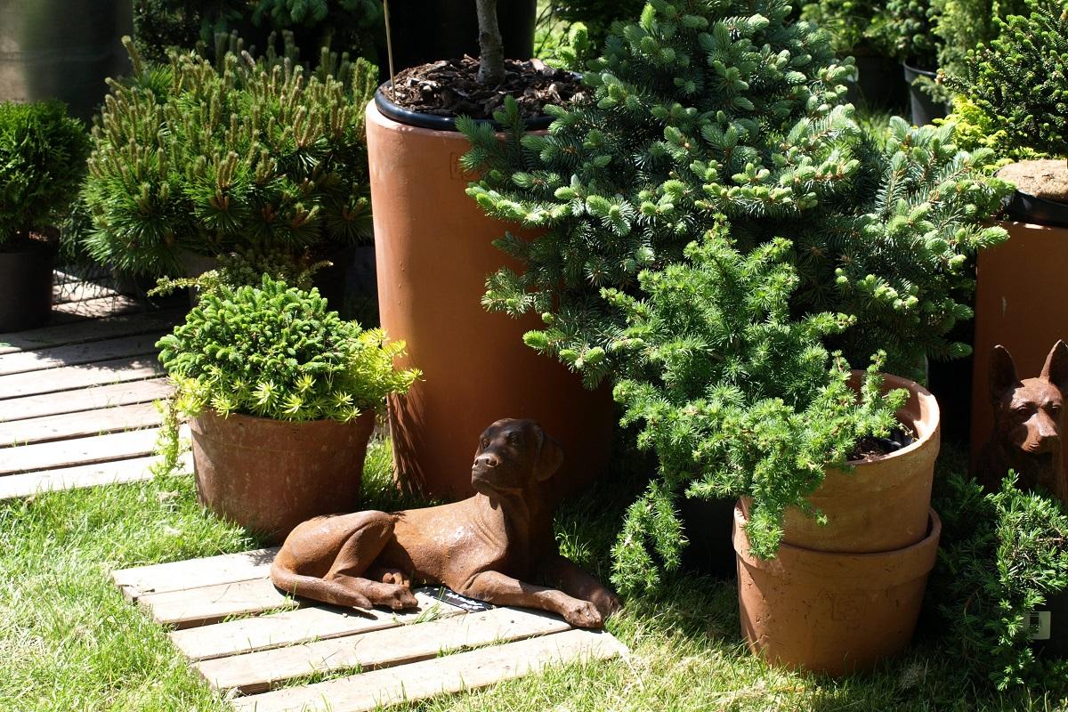 záhrada v kontajneri 6