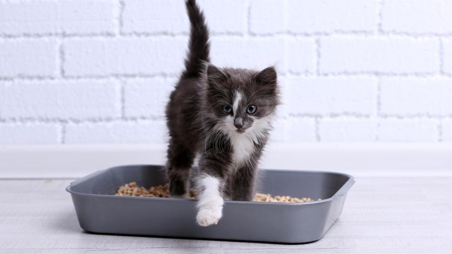 Druhy podstielky pre mačky