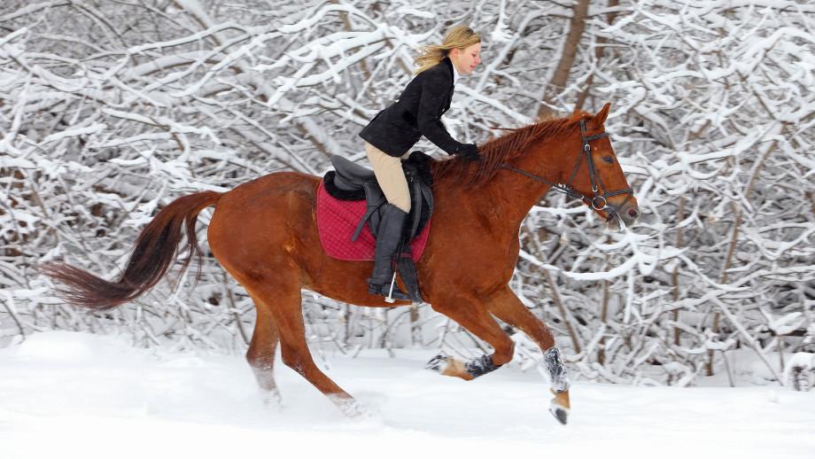 faf329f6da21d Buty do zimowej jazdy konnej - Allegro.pl
