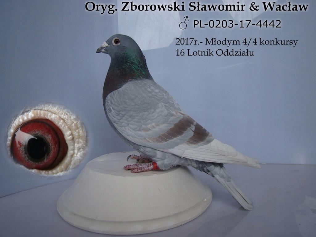 Oryg Zborowski Slawomir Waclaw Wnuk Ramsesa 7749998391 Oficjalne Archiwum Allegro