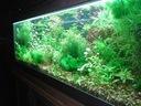 zestaw roślin - rosliny akwariowe tanio