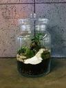 Ogród, las w szkle, bonsai, fitonia, florarium