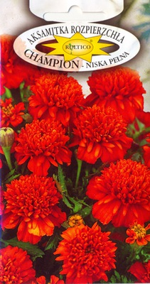 БАРХАТНАЯ __ЧЕМПИОН__NAJPIĘNIEJSZA Полное цветы -