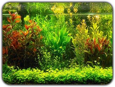 комплект Больших Растений 18 -25см на Зад аквариум 6 сорт