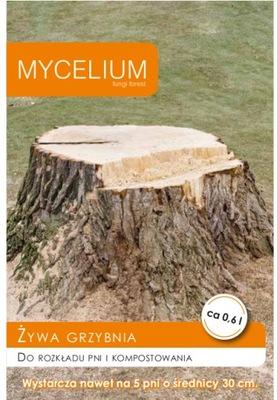Живой Мицелий для распределение стволов деревьев MYCELIUM