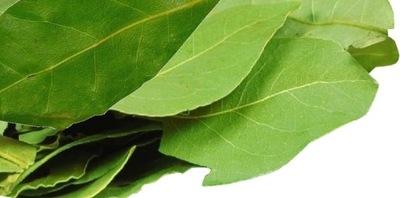 Лавровый лист листья лавровый лист 25г от
