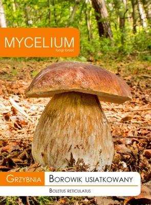 Мицелий белый гриб, БОРОВИК USIATKOWANY, Грибы